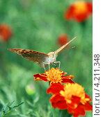 Бабочка. Стоковое фото, фотограф Николай Комаровский / Фотобанк Лори