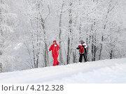 Лыжники в лесу (2013 год). Редакционное фото, фотограф Юрий Морозов / Фотобанк Лори