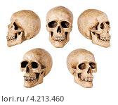 Купить «Человеческий череп в различных ракурсах на белом фоне», фото № 4213460, снято 29 апреля 2009 г. (c) Андрей Дыкун / Фотобанк Лори