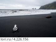 Пустынный пляж с чайкой. Стоковое фото, фотограф Denis Chernega / Фотобанк Лори