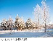Купить «Зимний пейзаж с деревьями покрытыми инеем», эксклюзивное фото № 4240420, снято 26 января 2013 г. (c) Игорь Низов / Фотобанк Лори
