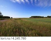 Купить «Летний пейзаж с зеленым полем и голубым небом», фото № 4245780, снято 3 июля 2011 г. (c) Юлия Машкова / Фотобанк Лори