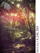 Тропический лес. Стоковое фото, фотограф Олеся Балыкина / Фотобанк Лори