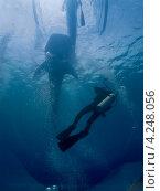 Купить «Силуэты китовой акулы и дайвера», фото № 4248056, снято 10 мая 2012 г. (c) Сергей Дубров / Фотобанк Лори