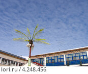 Искусственная пальма на фоне заснеженной крыши и неба в Тюмени (2011 год). Стоковое фото, фотограф Елена Киселева / Фотобанк Лори