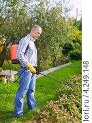 Мужчина опрыскивает кустарник в саду. Стоковое фото, фотограф Яков Филимонов / Фотобанк Лори