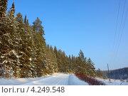 Сосновый лес и дорога под голубым небом. Стоковое фото, фотограф Владимир Аликин / Фотобанк Лори