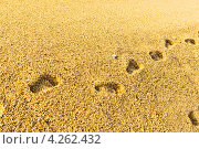 Купить «Следы на песчаном пляже», фото № 4262432, снято 12 сентября 2012 г. (c) Валерия Потапова / Фотобанк Лори