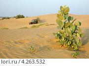 Сафари на джипе в пустыне Тар, Раджастан, Индия (2012 год). Стоковое фото, фотограф крижевская юлия валерьевна / Фотобанк Лори