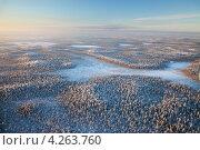 Купить «Лесная равнина зимой, вид сверху», фото № 4263760, снято 20 января 2011 г. (c) Владимир Мельников / Фотобанк Лори