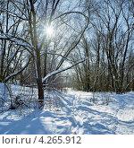 Купить «Пейзаж с солнцем, просвечивающим через ветки деревьев в зимнем лесу», фото № 4265912, снято 18 августа 2019 г. (c) Михаил Марковский / Фотобанк Лори