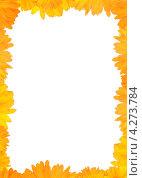 Рамка из желтых гербер. Стоковое фото, фотограф Andrei Nekrassov / Фотобанк Лори