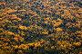 Осенний смешанный лес, вид сверху, фото № 4275824, снято 8 сентября 2011 г. (c) Владимир Мельников / Фотобанк Лори