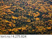Купить «Осенний смешанный лес, вид сверху», фото № 4275824, снято 8 сентября 2011 г. (c) Владимир Мельников / Фотобанк Лори