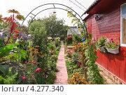 Купить «Дачный участок», эксклюзивное фото № 4277340, снято 17 августа 2012 г. (c) Алёшина Оксана / Фотобанк Лори