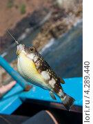 Рыбка на крючке. Стоковое фото, фотограф Котова Мария / Фотобанк Лори