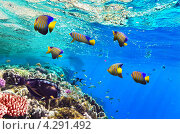 Купить «Кораллы и рыбы в Красном море. Египет, Африка.», фото № 4291492, снято 3 сентября 2012 г. (c) Vitas / Фотобанк Лори