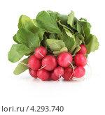 Купить «Пучок свежей красной редиски», фото № 4293740, снято 9 декабря 2018 г. (c) Food And Drink Photos / Фотобанк Лори