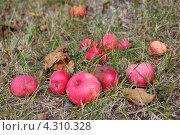 Яблочный сад. Стоковое фото, фотограф Наталья Гуреева / Фотобанк Лори
