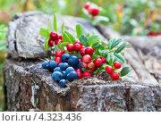 Лесные ягоды на старом пне. Стоковое фото, фотограф FotograFF / Фотобанк Лори