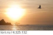 Пеликан летит над океаном. Стоковое фото, фотограф Ludenya Vera / Фотобанк Лори