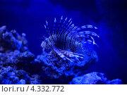 Рыба в воде. Стоковое фото, фотограф Сергей Шпаков / Фотобанк Лори