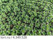 Текстура - зеленая трава. Стоковое фото, фотограф Виктор Пелих / Фотобанк Лори