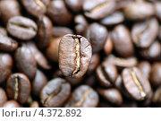 Кофейные зерна, фон. Стоковое фото, фотограф Александра Ткачук / Фотобанк Лори