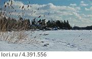 Купить «На берегу замерзшего озера в солнечный морозный день», видеоролик № 4391556, снято 11 марта 2013 г. (c) Кекяляйнен Андрей / Фотобанк Лори