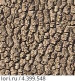 Кора дуба. Бесшовная текстура. Стоковое фото, фотограф Илья Урядников / Фотобанк Лори