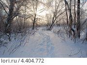 Солнце в зимнем лесу. Стоковое фото, фотограф Ольга Бережнова / Фотобанк Лори