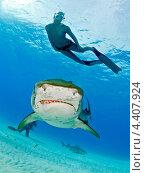 Тигровая акула и фри-дайвер. Редакционное фото, фотограф Игорь Анатольевич / Фотобанк Лори