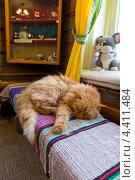 Купить «Рыжий кот спит на скамейке в музее мыши», фото № 4411484, снято 8 марта 2013 г. (c) Сергей Лаврентьев / Фотобанк Лори