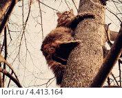Уличная кошка на дереве. Стоковое фото, фотограф Юлия Сагитова / Фотобанк Лори