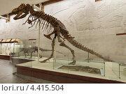 Купить «Москва, Палеонтологический музей имени Ю.А. Орлова, скелет таброзавра (Tabrosaurus baar)», фото № 4415504, снято 16 сентября 2012 г. (c) Игорь Долгов / Фотобанк Лори