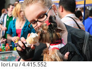Купить «Йоркширский терьер трескает мороженое», эксклюзивное фото № 4415552, снято 22 апреля 2012 г. (c) Алёшина Оксана / Фотобанк Лори