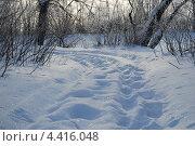 Следы на снегу. Стоковое фото, фотограф Ольга Бережнова / Фотобанк Лори