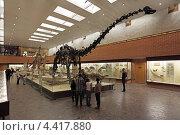 Купить «Москва, Палеонтологический музей имени Ю.А. Орлова, зал мезозоя, скелет диплодока (Diplodocus carnegii)», фото № 4417880, снято 16 сентября 2012 г. (c) Игорь Долгов / Фотобанк Лори
