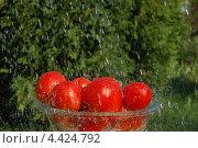 Купить «Урожай», фото № 4424792, снято 14 августа 2010 г. (c) Екатерина Пивоварова / Фотобанк Лори