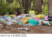 Купить «Куча бытового мусора в лесу», эксклюзивное фото № 4429232, снято 22 сентября 2012 г. (c) Dmitry29 / Фотобанк Лори