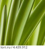 Купить «Зеленый травяной фон», фото № 4439912, снято 27 января 2013 г. (c) Архипова Мария / Фотобанк Лори