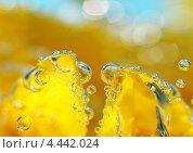 Лепестки и воздух. Стоковое фото, фотограф Евгений Валерьевич / Фотобанк Лори