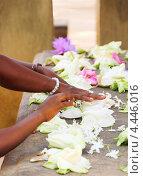 Руки людей сортируют цветы в храме, Анурадапура, Шри-Ланка (2012 год). Стоковое фото, фотограф Наталия Давидович / Фотобанк Лори