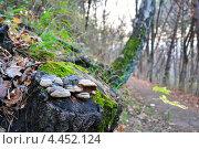 Осенний пейзаж в Кисловодском парке. Стоковое фото, фотограф Синенко Юрий / Фотобанк Лори