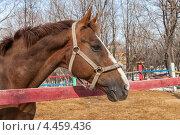 Купить «Портрет лошади весной в загоне», фото № 4459436, снято 23 февраля 2019 г. (c) FotograFF / Фотобанк Лори