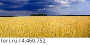 Перед  грозой. Стоковое фото, фотограф Скляренко Валерий / Фотобанк Лори