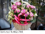 Корзинка с цветами крупным планом. Стоковое фото, фотограф Моисеева Светлана / Фотобанк Лори