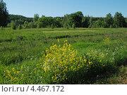 Купить «Летний пейзаж, Истринский район, Московская область», эксклюзивное фото № 4467172, снято 12 июня 2011 г. (c) lana1501 / Фотобанк Лори