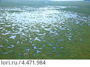 Купить «Поверхность озера, заросшая травой», фото № 4471984, снято 19 августа 2011 г. (c) Владимир Мельников / Фотобанк Лори