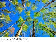 Весна, деревья на фоне неба. Стоковое фото, фотограф Иванов Александр / Фотобанк Лори